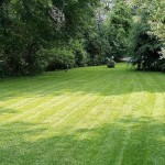 How to Look after Lawn