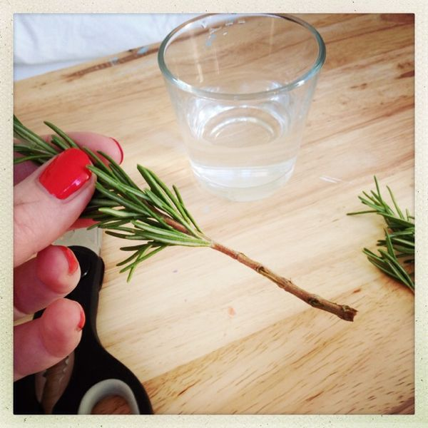How To Grow Your Own Rosemary
