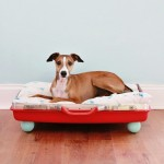 The Steal List: Pet Beds